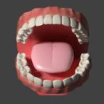 blender 歯茎 歯 舌 のモデリングデータ